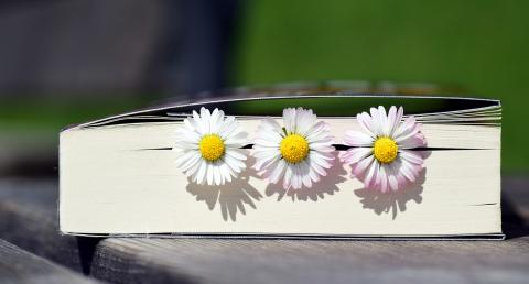 Photo of book with three daisies in it.